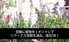 部屋に植物を!オシャレでリラックス空間を演出。造花OK!