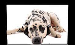 iPhone・iPadで普通の写真を3Dに加工させるアプリ『レリーフ』