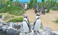 ペンギンアップデート3.0が来る!今から対策はできるか?