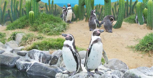 ペンギンアパート.0
