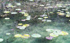 モネ『睡蓮』そっくり!岐阜県関市の『モネの池』への行き方&住所