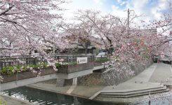 『君の名は。』『聲の形』など岐阜県の聖地巡礼が熱い理由とは
