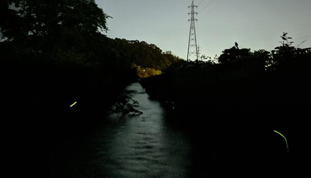 ホタルの光の線も撮影